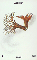 Aimees-69u-Abbruch